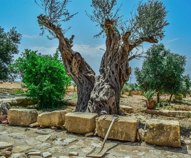 Visita tu olivo solidario apadrinado en la Sierra de Segura